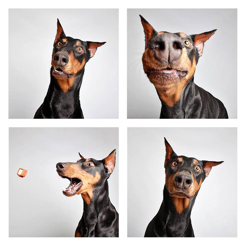 Смешные фотографии собак. Фото № 2