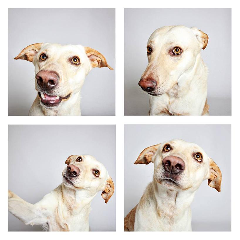 Смешные фотографии собак. Фото № 3