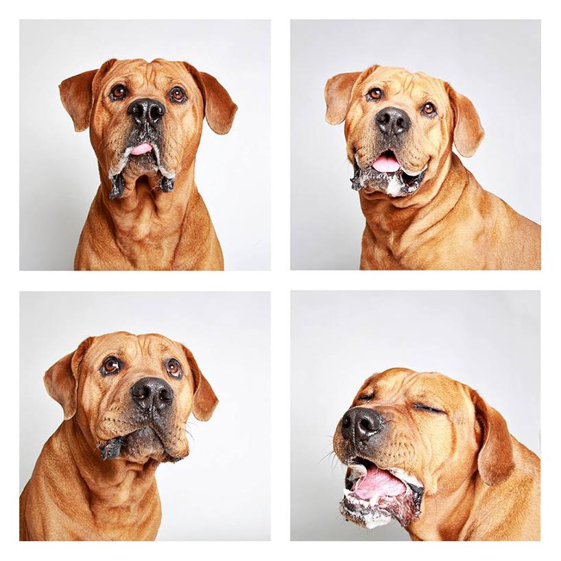 Смешные фотографии собак. Фото № 5