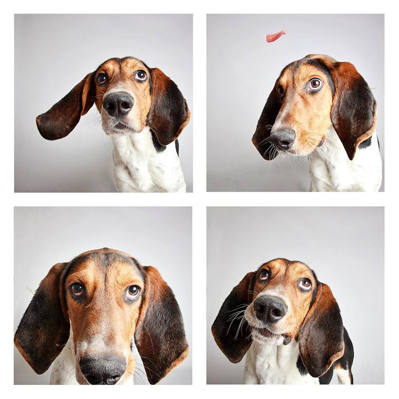 Смешные фотографии собак. Фото № 7