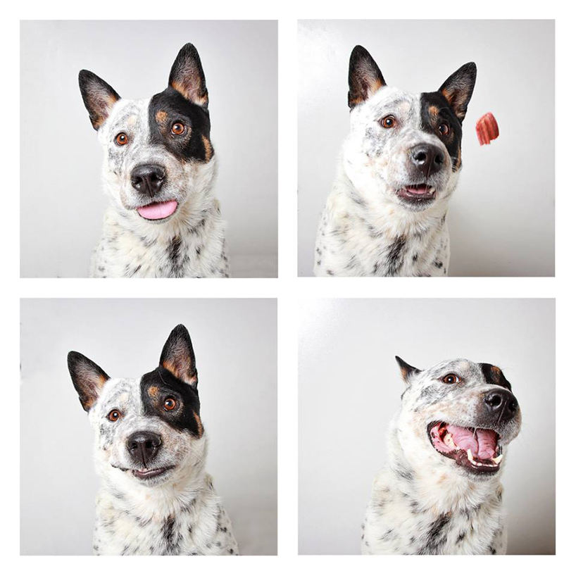 Смешные фотографии собак. Фото № 8