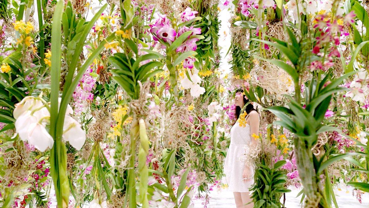 Цветы. Висячие сады. Фото № 1