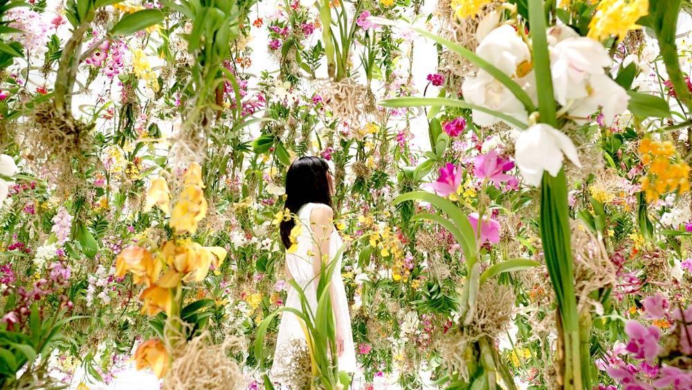 Цветы. Висячие сады. Фото № 2