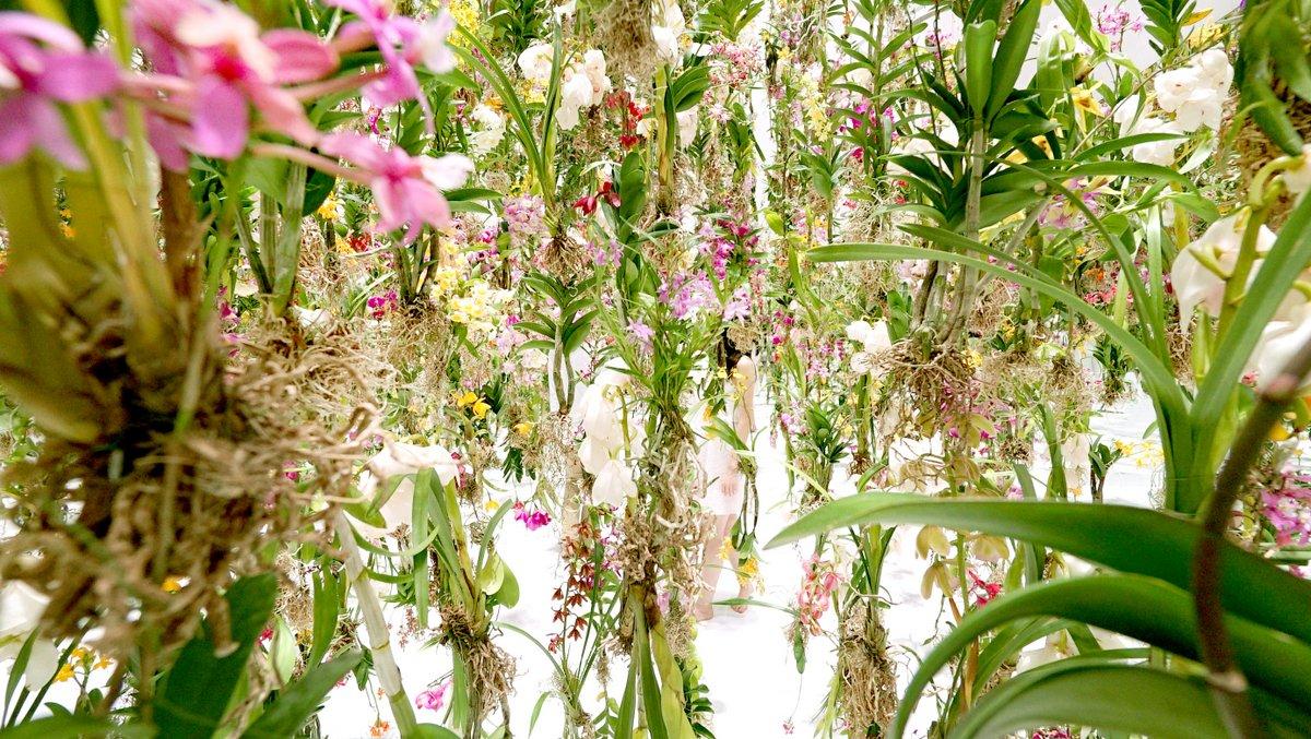 Цветы. Висячие сады. Фото № 3