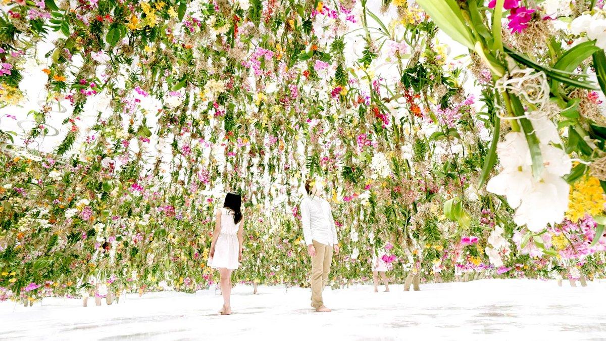 Цветы. Висячие сады. Фото № 4