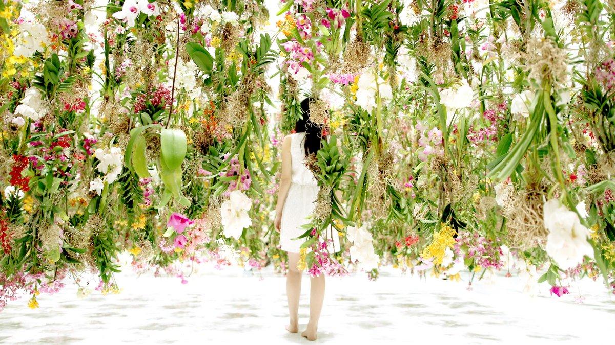 Цветы. Висячие сады. Фото № 5