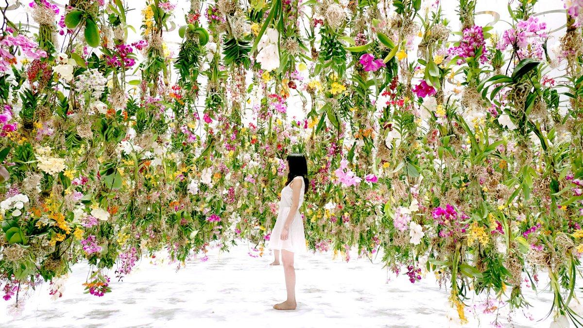 Цветы. Висячие сады. Фото № 6