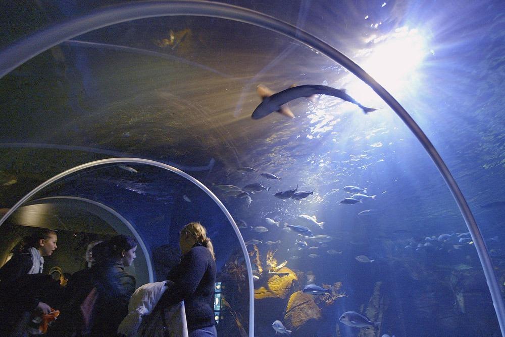 Гигантский аквариум в Берлине_02