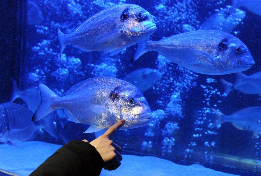 Гигантский аквариум в Берлине_05