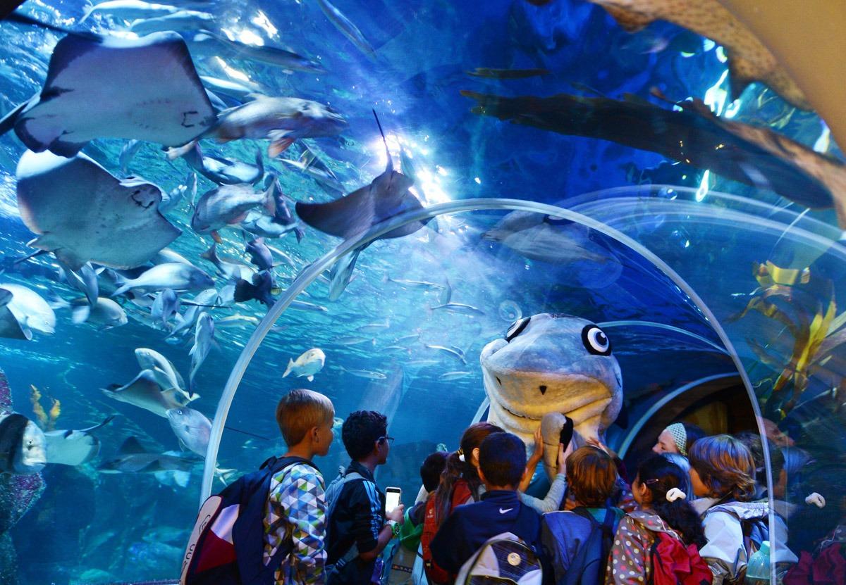 Гигантский аквариум в Берлине_14