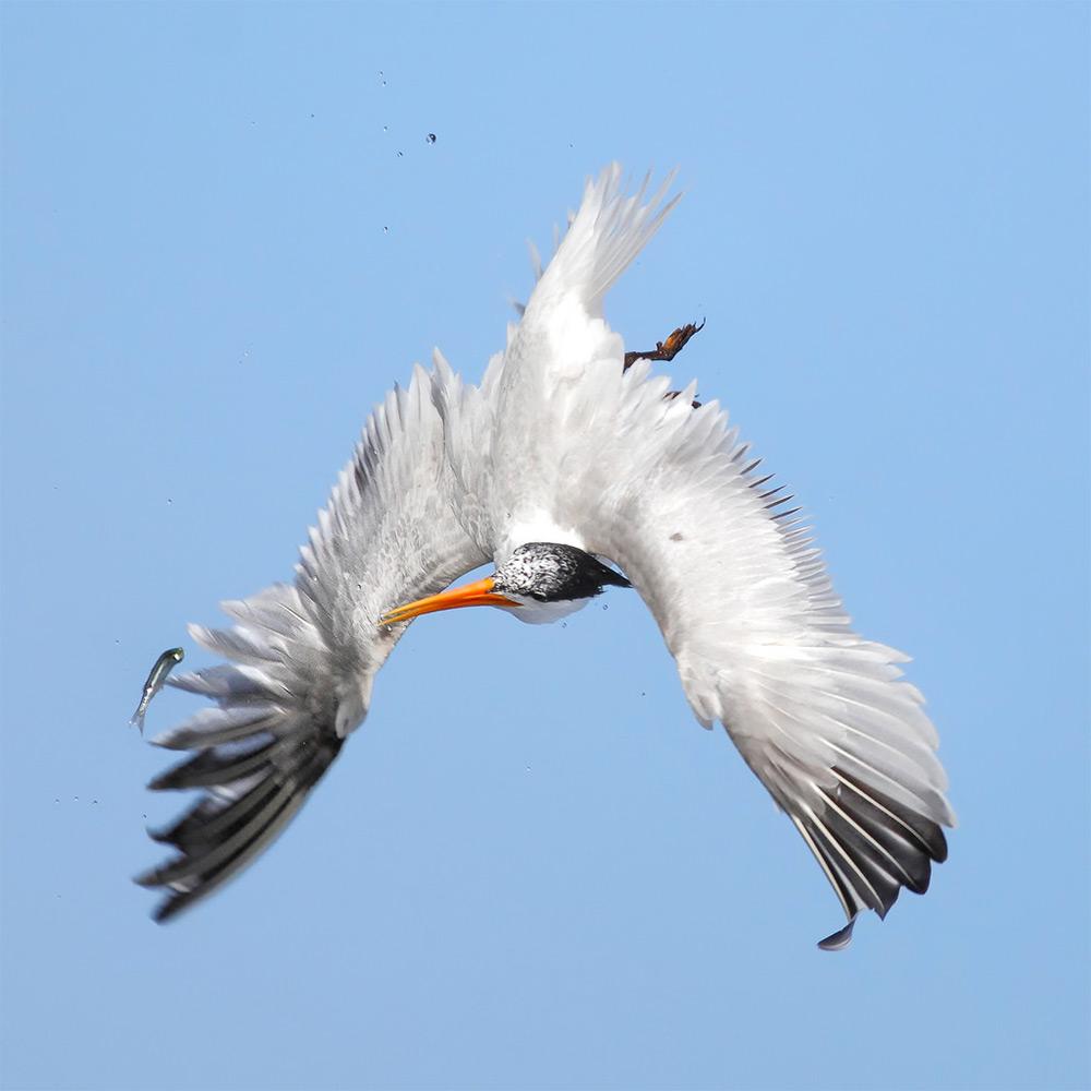 фотографии водоплавающих птиц. Фото № 10