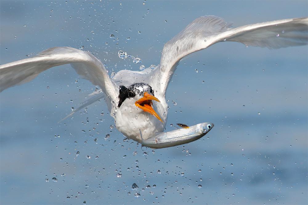 фотографии водоплавающих птиц. Фото № 2
