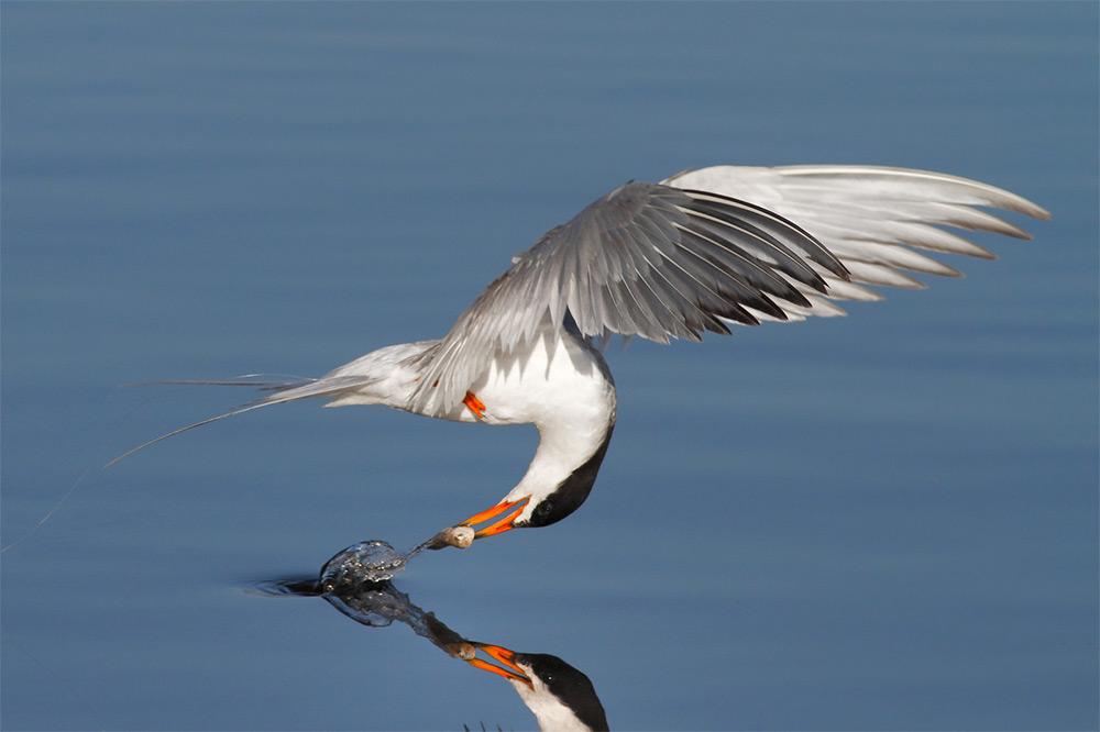 фотографии водоплавающих птиц. Фото № 3