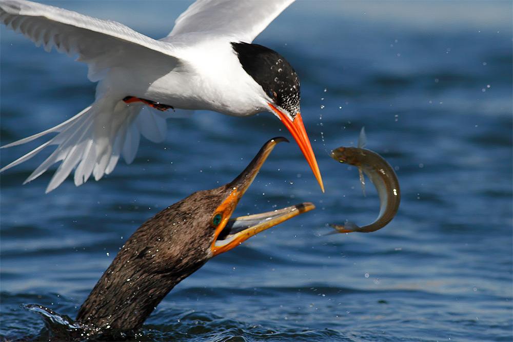 фотографии водоплавающих птиц. Фото № 6