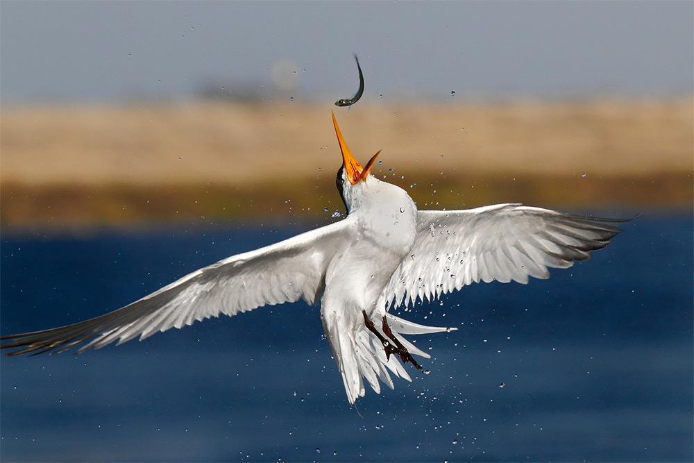 фотографии водоплавающих птиц. Фото № 8