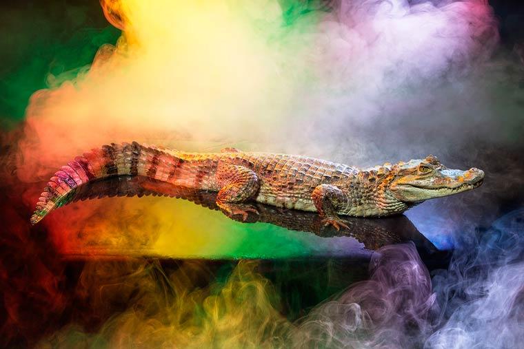 _кайманы и крокодилы, фото1