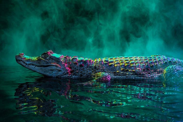 _кайманы и крокодилы, фото10