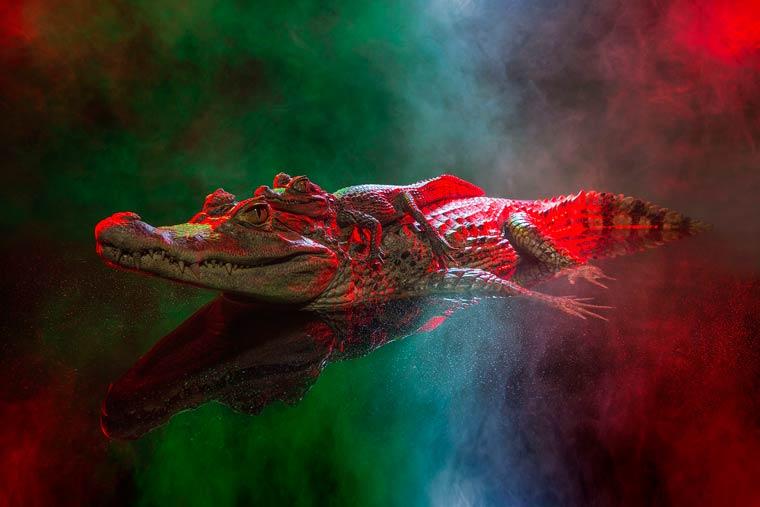 _кайманы и крокодилы, фото12