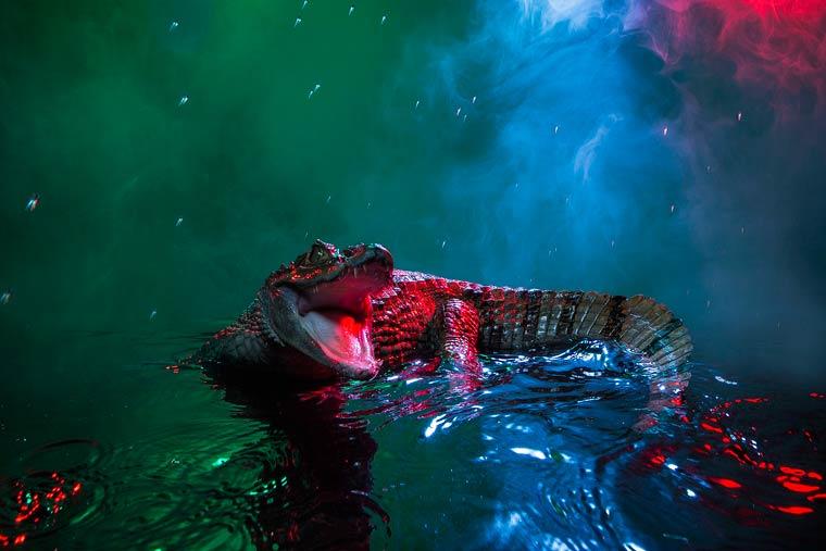 _кайманы и крокодилы, фото13