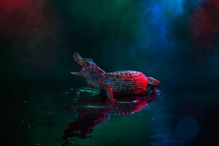 _кайманы и крокодилы, фото14