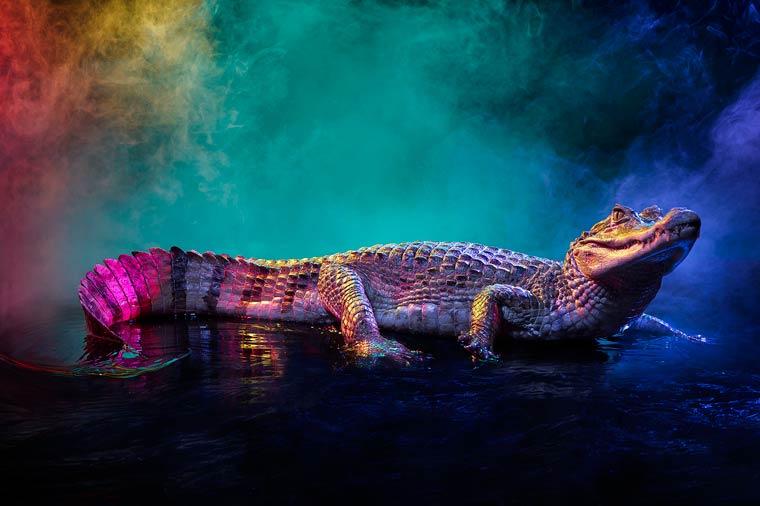 _кайманы и крокодилы, фото2