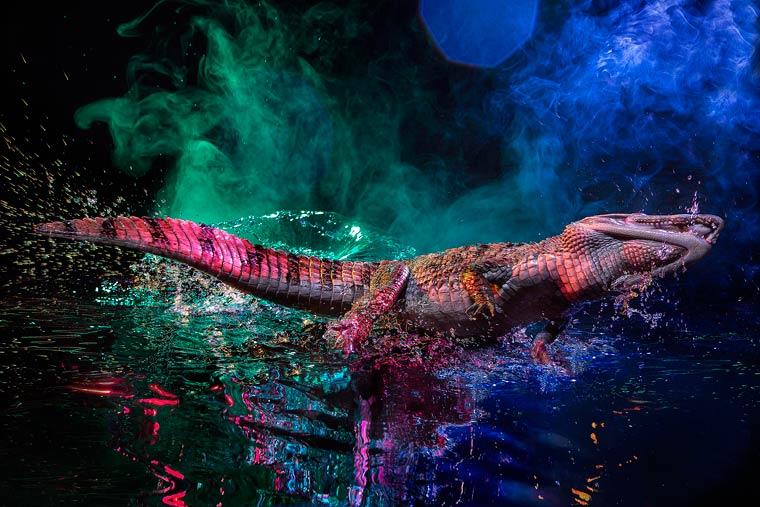 _кайманы и крокодилы, фото3