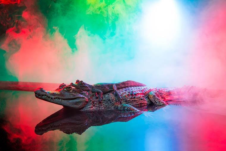 _кайманы и крокодилы, фото4