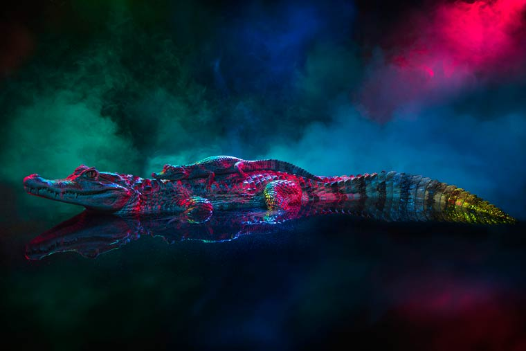 _кайманы и крокодилы, фото5