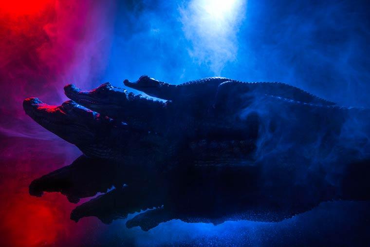 _кайманы и крокодилы, фото6