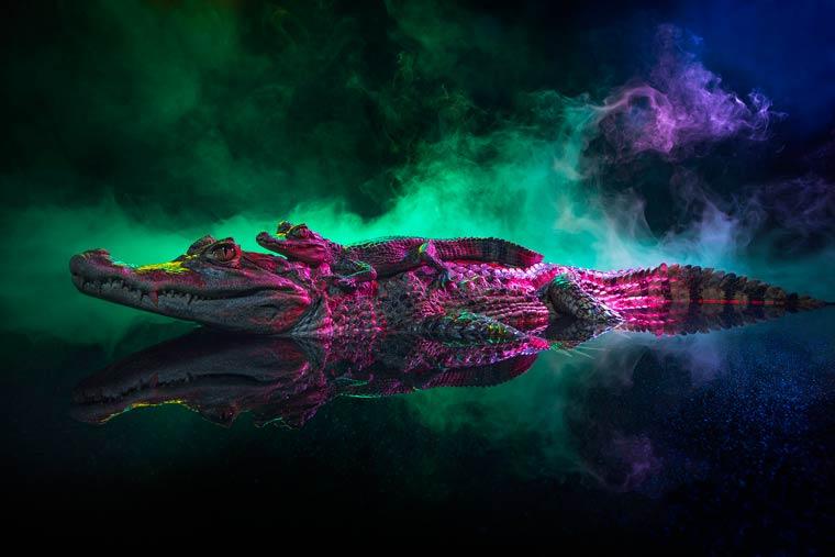_кайманы и крокодилы, фото7