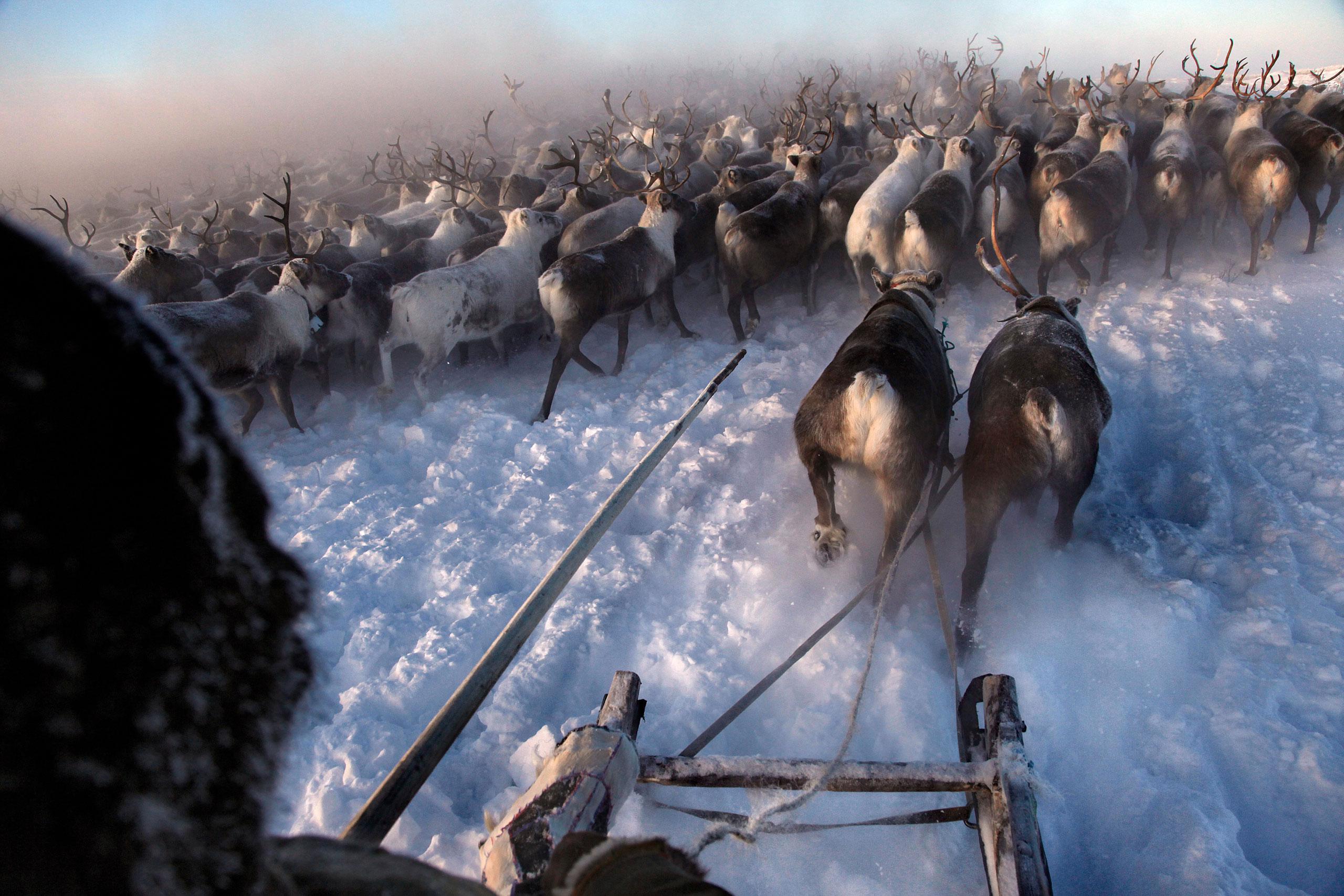 Арктика, крайний Север, нефть, полярный круг, Воркута-3