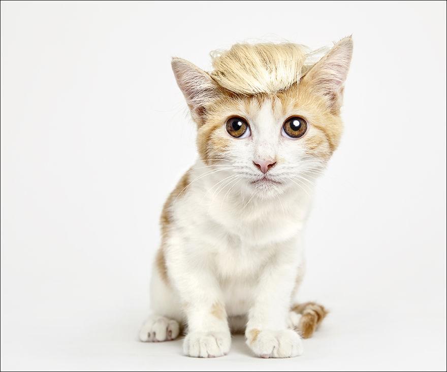 фотографии кошек в шляпах-1