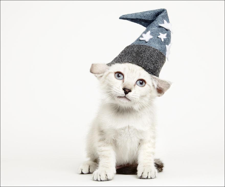 фотографии кошек в шляпах-2