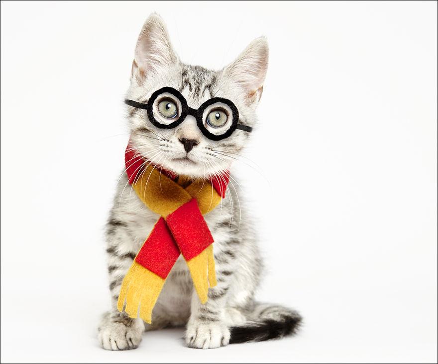 фотографии кошек в шляпах-4