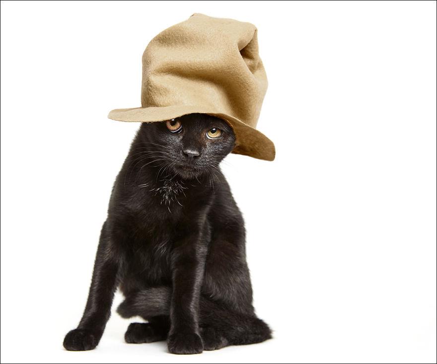 фотографии кошек в шляпах-6