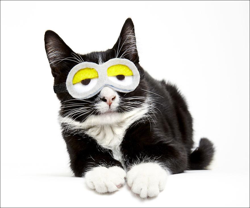 фотографии кошек в шляпах-7