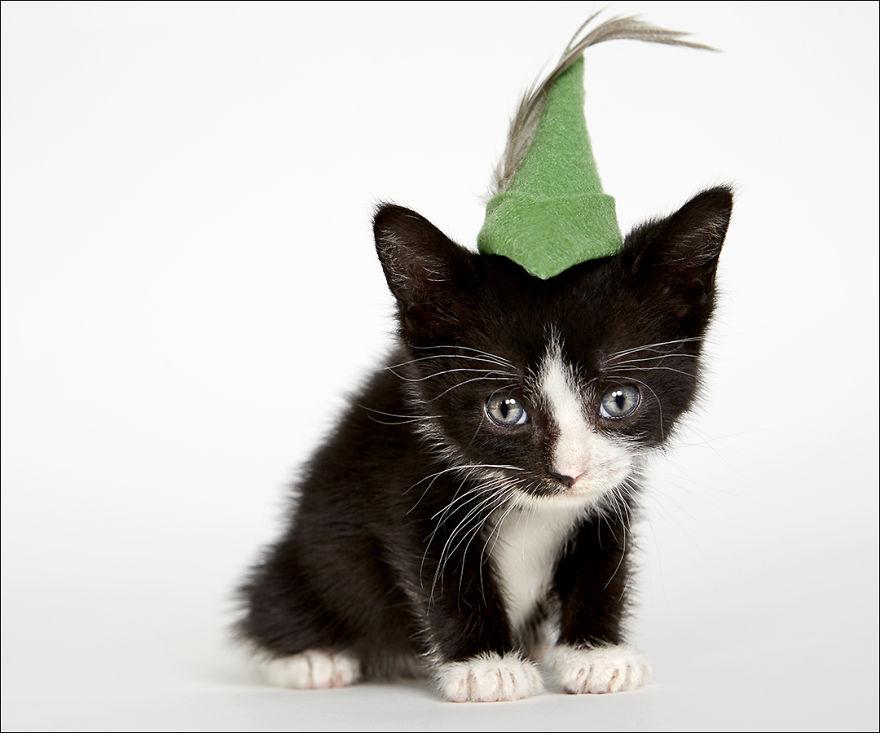 фотографии кошек в шляпах-8