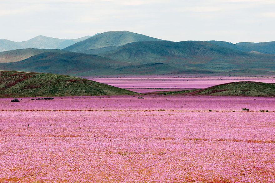фотографии пустыни Атакама в Чили-1
