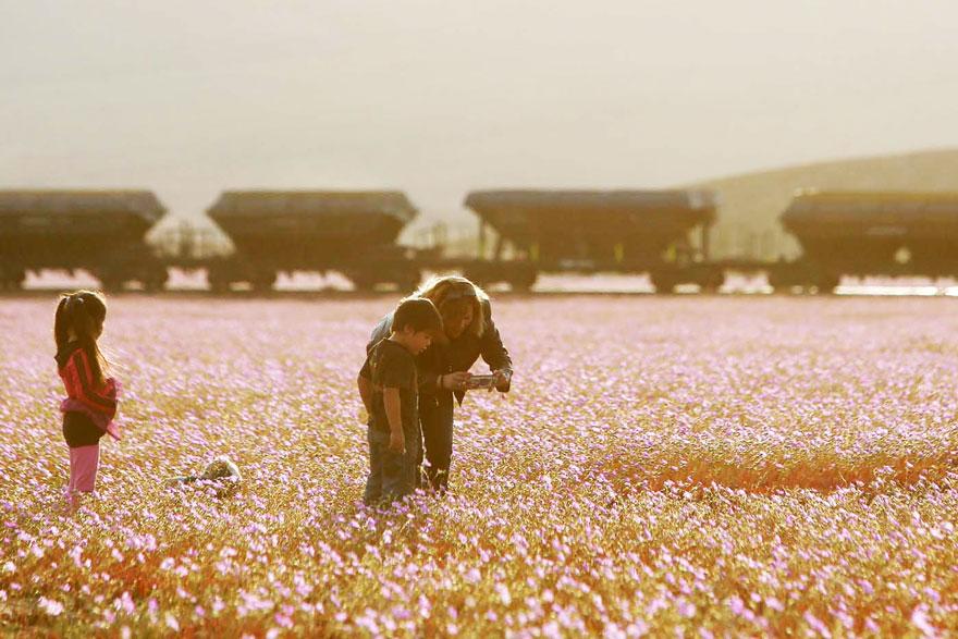 фотографии пустыни Атакама в Чили-2