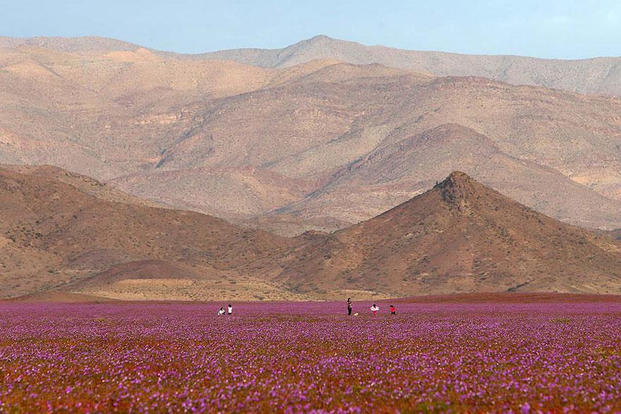 фотографии пустыни Атакама в Чили-3