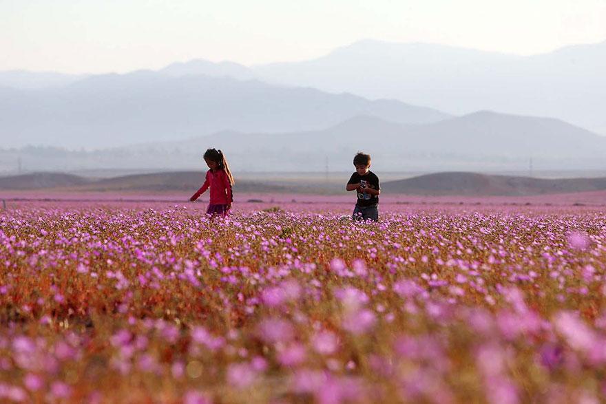 фотографии пустыни Атакама в Чили-4