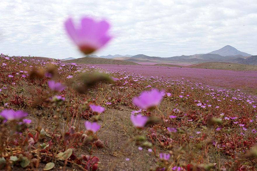 фотографии пустыни Атакама в Чили-5