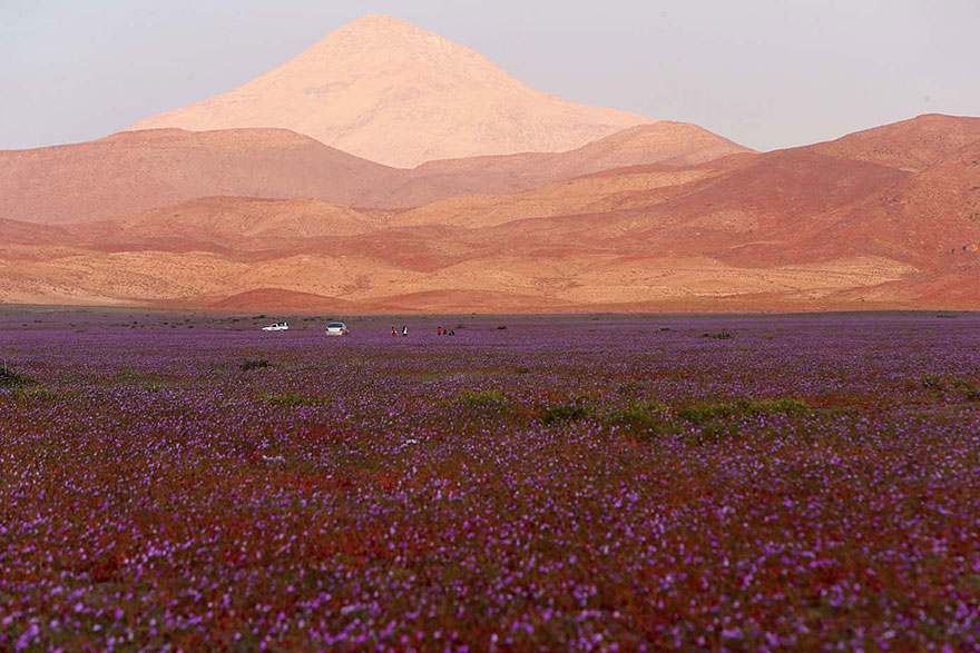 фотографии пустыни Атакама в Чили-6