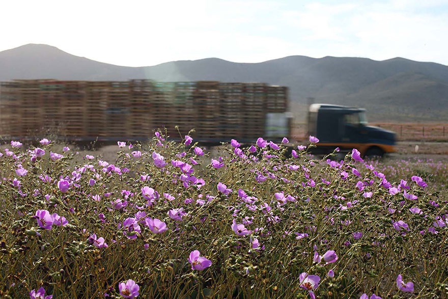 фотографии пустыни Атакама в Чили-7