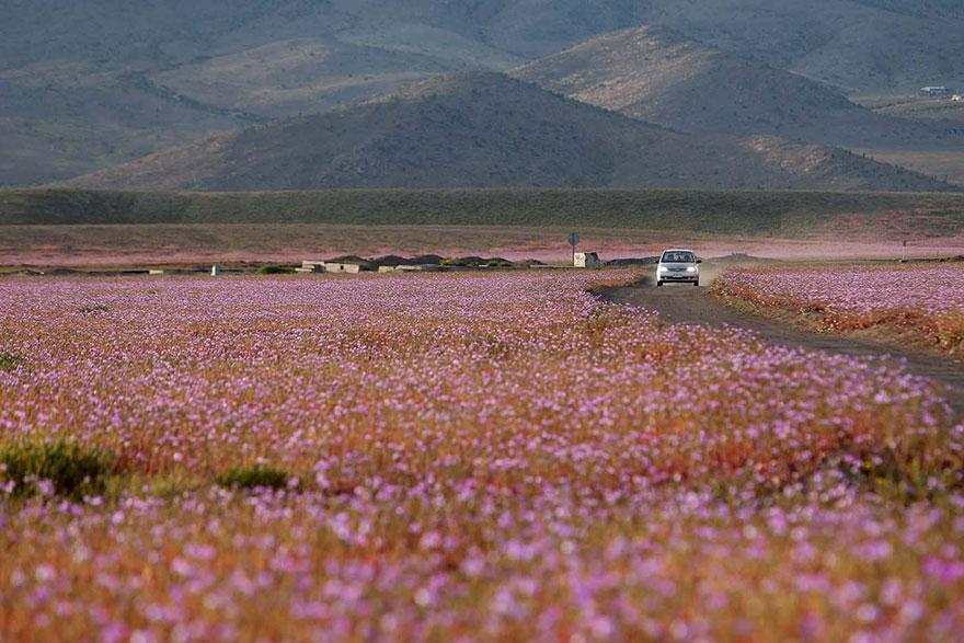 фотографии пустыни Атакама в Чили-8