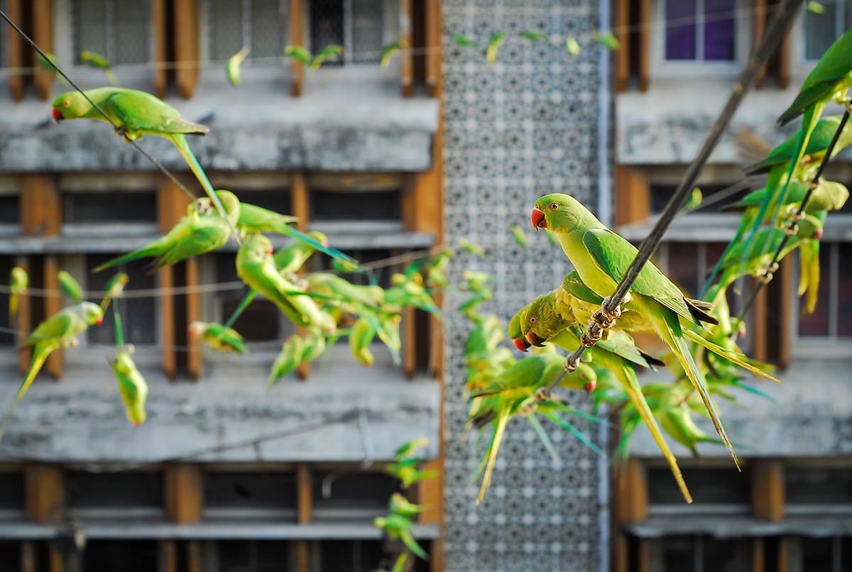 фотографии зеленых попугаев-1