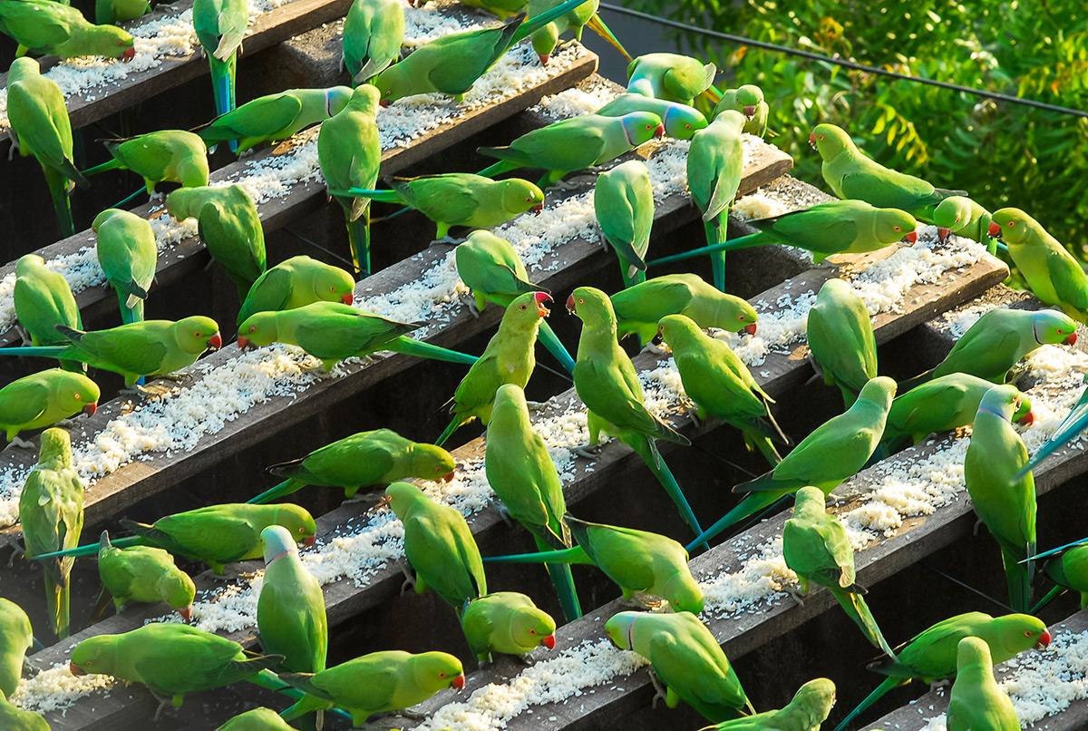 фотографии зеленых попугаев-5