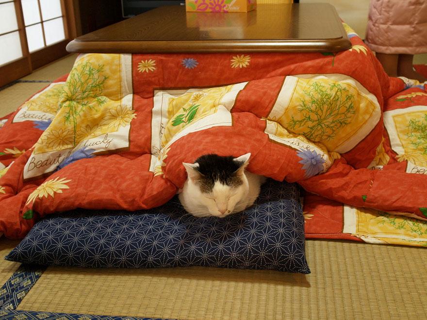котацу, японское одеяло с источником тепла-2