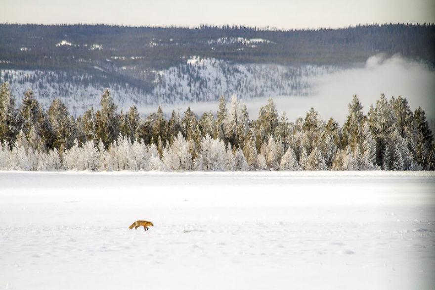 красота национального парка йеллоустоун-4
