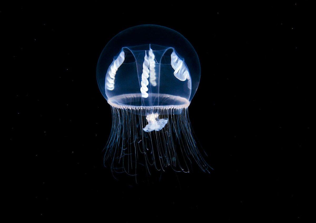 Фотографии морской жизни у Полярного круга-1